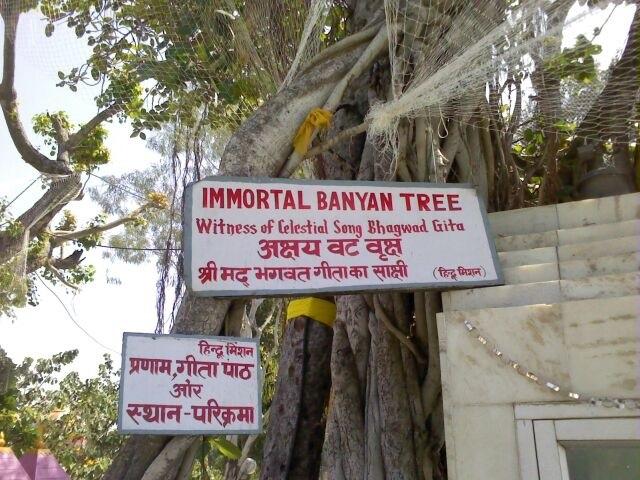 Banyan tree Gita