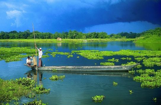 Assam Day 2.jpg