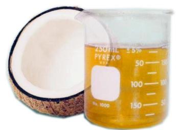 Coconut 17