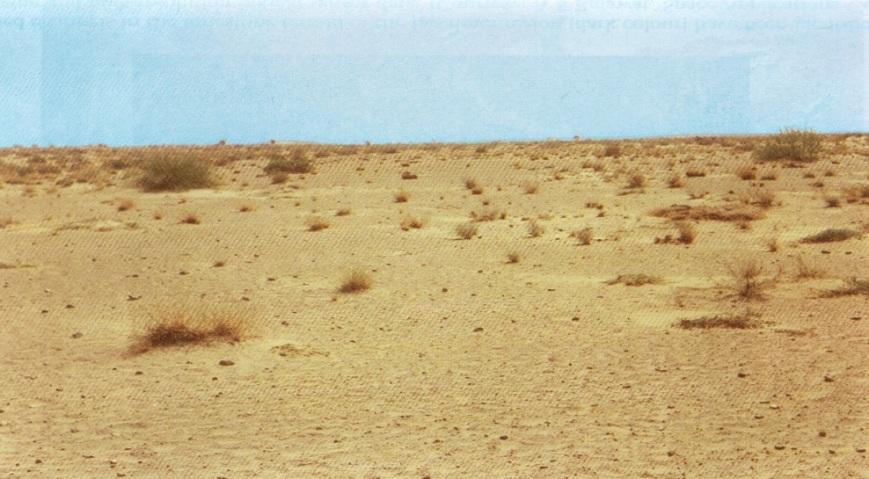 Jaisalmer 5