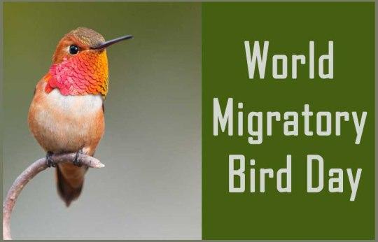 world-migratory-bird-day-hummingbird-1080x630